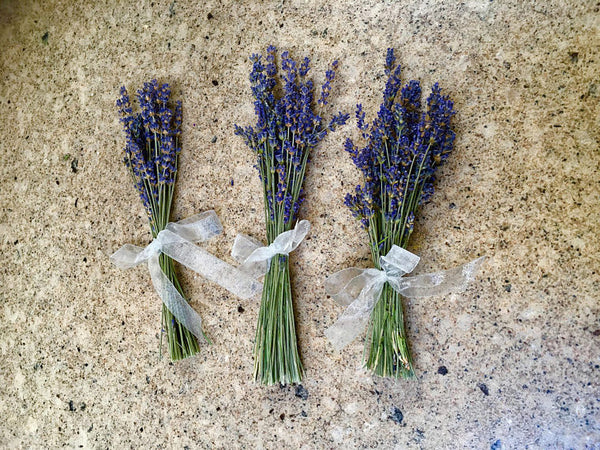 Beautiful & Fragrant - Lavender Mini