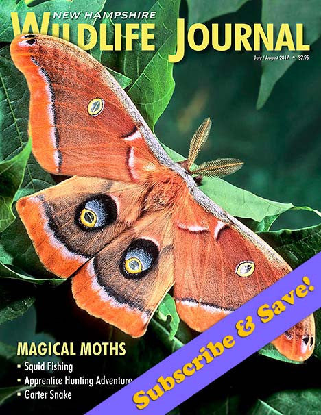 Subscribe to NH Wildlilfe Journal Magazine
