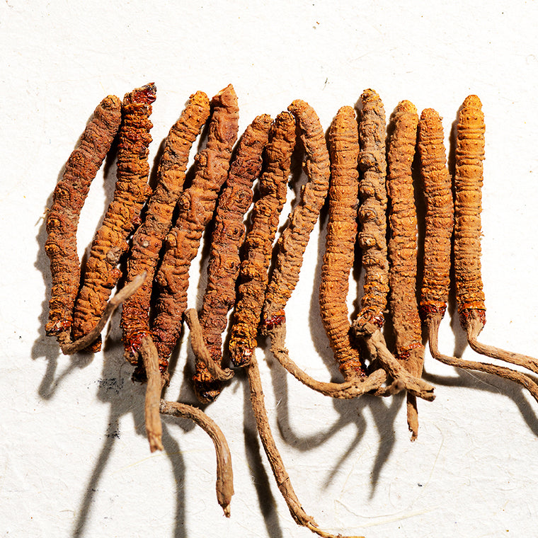 VitalFit Source: Endurance Building Cordyceps