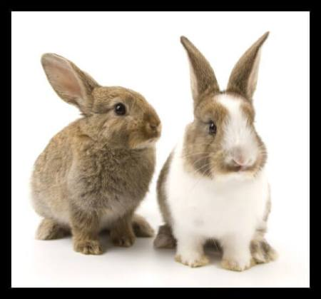 Animal Testing in the Cosmetic Industry