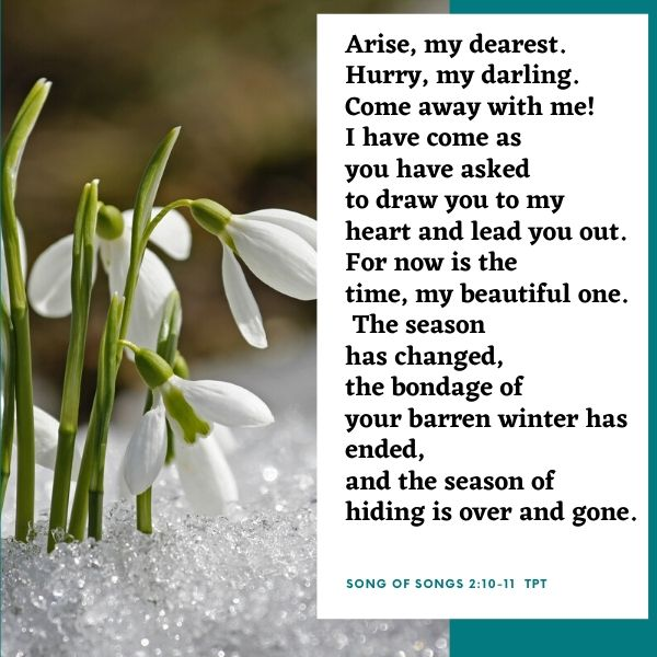 crocus in snow Son of songs 2:10-11
