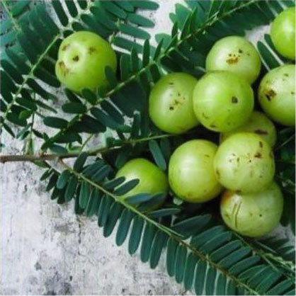 Benefits of Amla Oil in Skincare