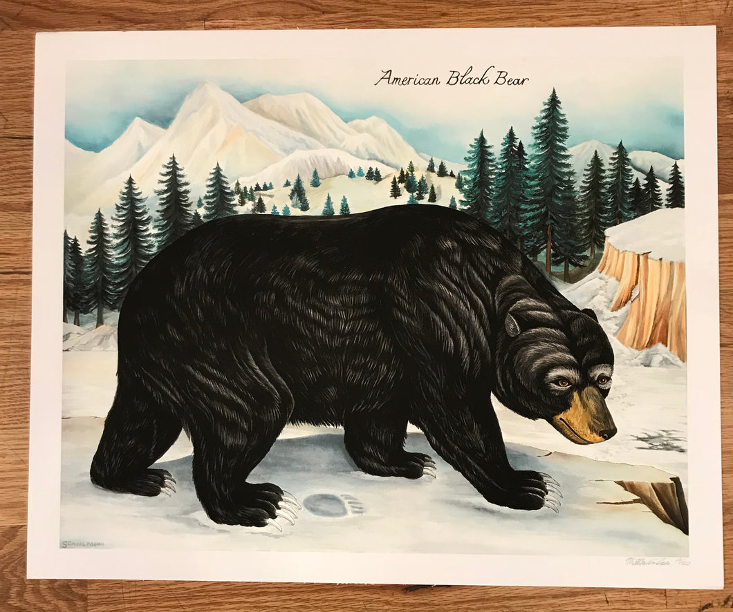 American Black Bear LTD Print - Matt Scanlan