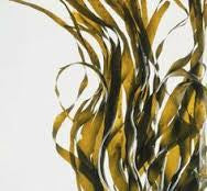 The Nutritional Benefits of Seaweed, The Ocean's Superfood