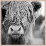 BOVINE CLOSE UP MONOCHROME FRAMED CANVAS PRINT