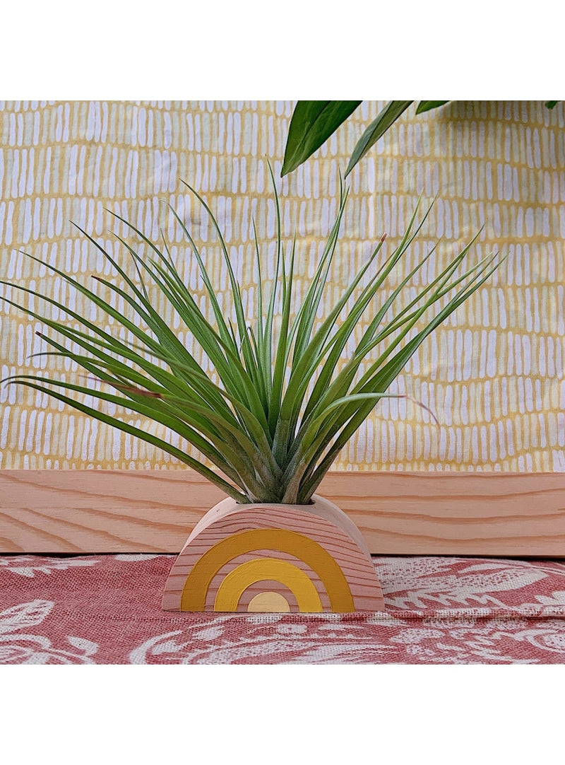 Goodsmith Gift Rainbow Air Plant Holder in Yellow Valia Honolulu