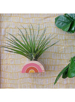 Goodsmith Gift Rainbow Air Plant Magnet in Yellow/Orange Valia Honolulu