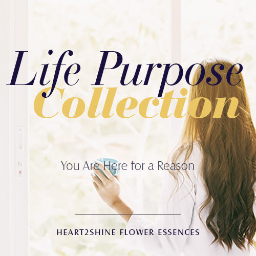 Life Purpose Collection