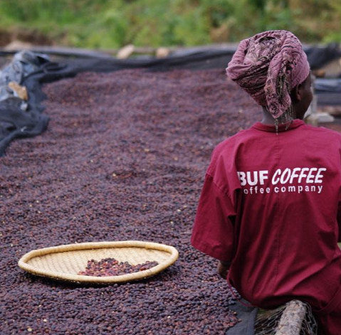 ANVIL Rwanda - BUF Remera - Micro Lot - Limited Availability