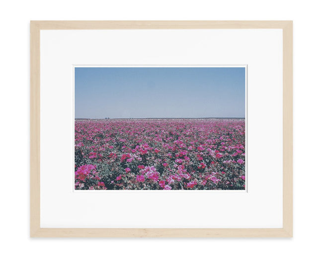 Rose Fields Art Print