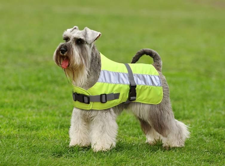 Flecta Hi Vis Dog Jacket