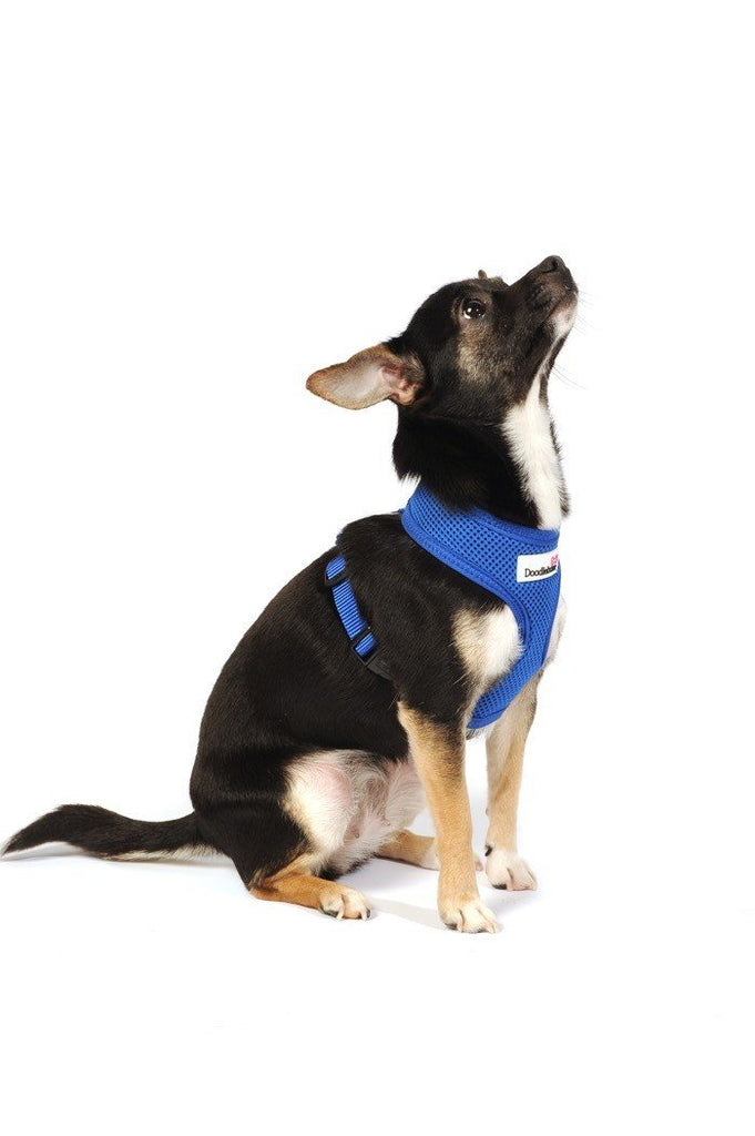 Doodlebone Royal Blue Padded Mesh Harness