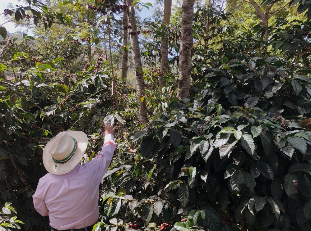 Why Organic Coffee is Important