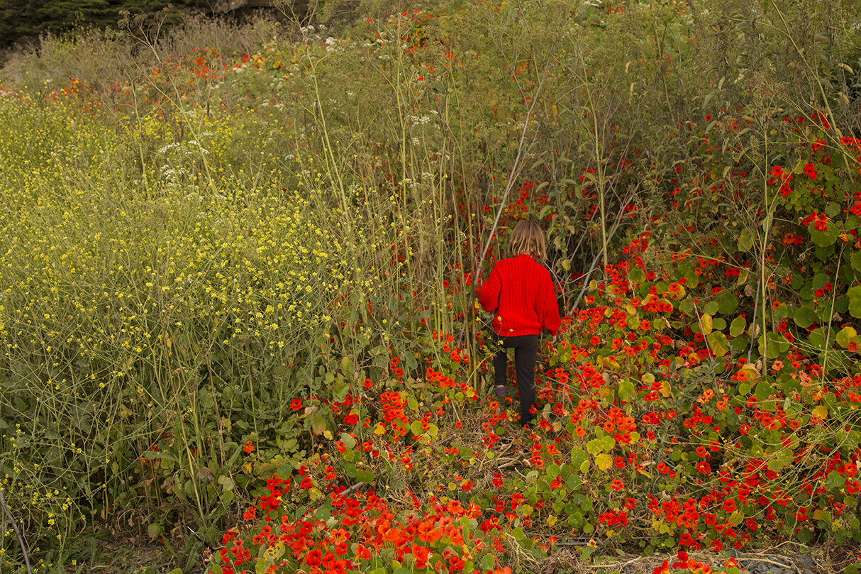 A child in a red sweater walking into a field of red and yellow flowers. Photo by Krysta Jabczenski.