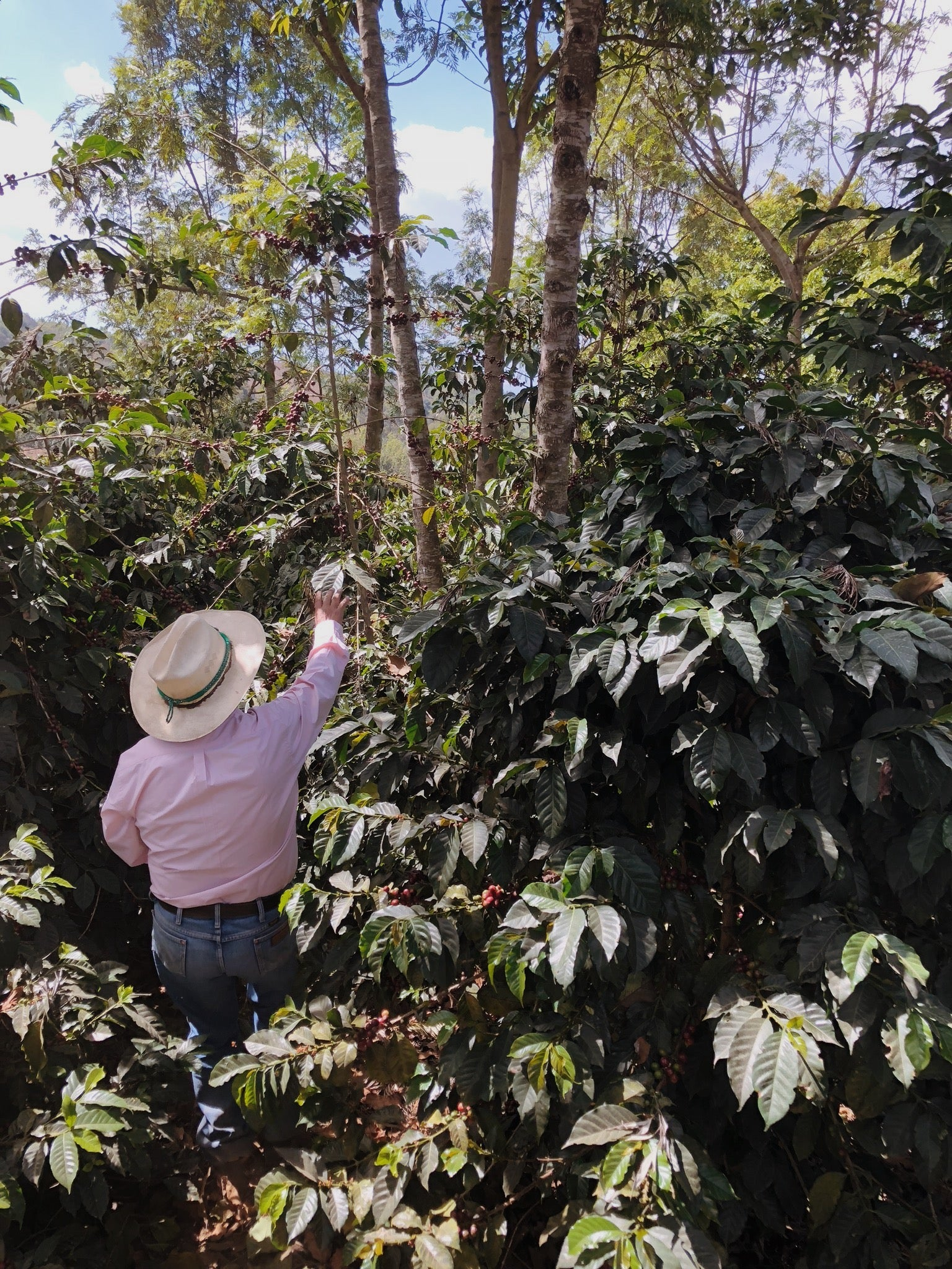 A coffee farmer in the mountains above Antigua, Guatemala | Canyon Coffee