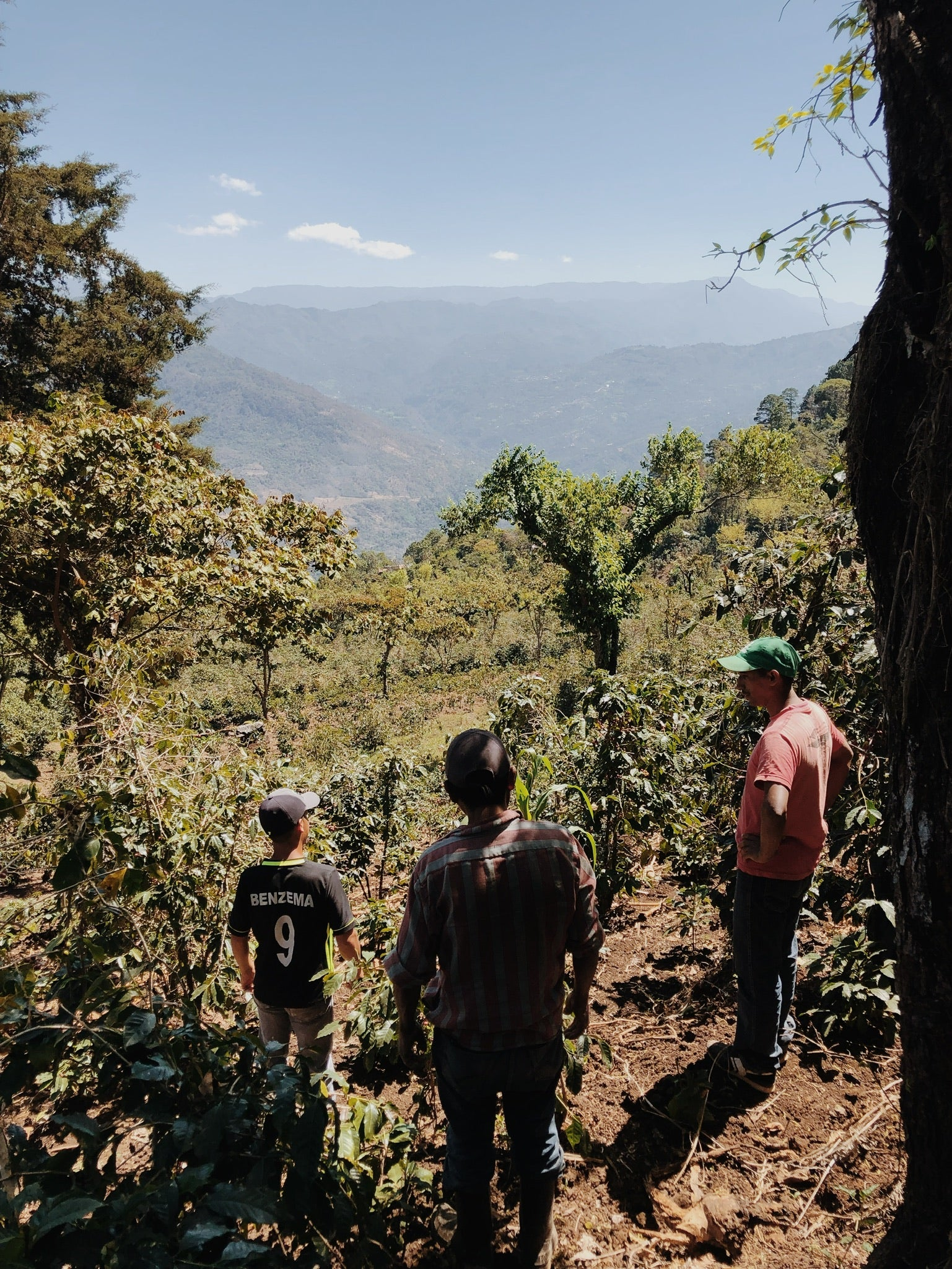 Three coffee farmers look out over a mountain valley in northern Guatemala