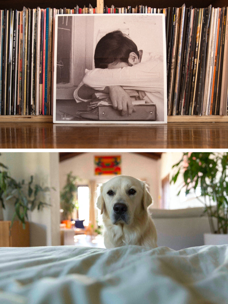 A photo of a record collection, with Metz record propped against the stack, and a photo below of a white lab.