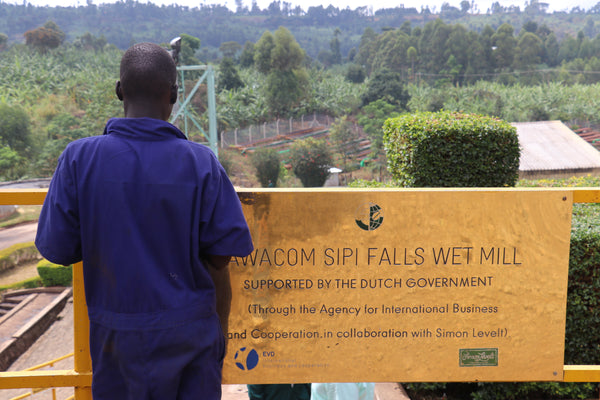 Sipi Falls Washing Station in Uganda