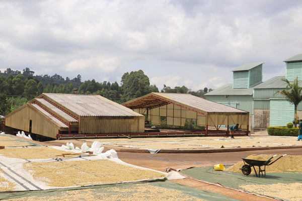 Sipi Falls Washing Station, where Canyon Coffee's red honey process coffee, Gamatui, is processed