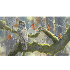 Treetop Hideaway - Owl;  Wrapped Canvas Quintet (Set of 5) by Susan Bourdet - F085810430