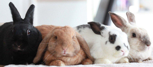 Bonding Bunnies Method