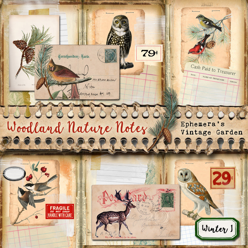 NEW! Woodland Nature Notes - Winter