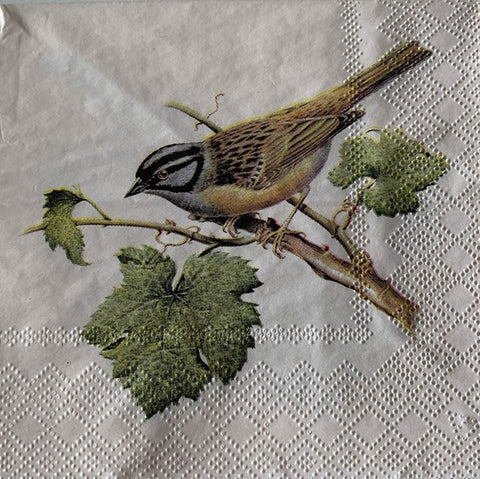 Decoupage Napkin - Perched