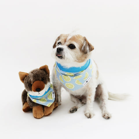 Image of Ace Reversible Dog Bandanas matching with owners at Hound and Friends