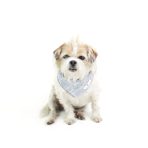 Odie Square Dog Bandanas and Accessories | Hound and Friends