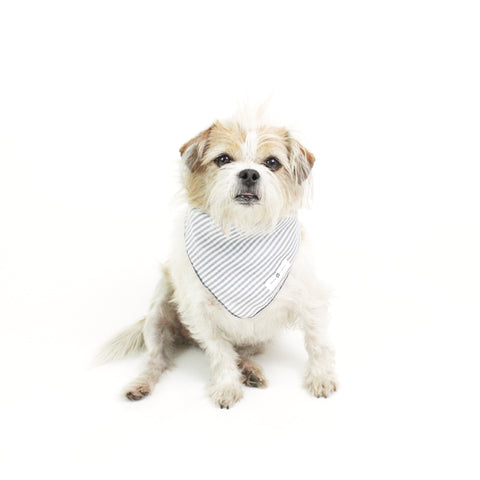 Image of Shakes Square Blue Stripes Bandana for Matching Dog Bandanas and Accessories | Hound and Friends