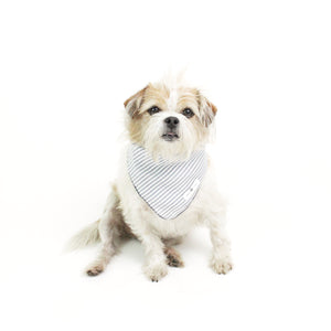Shakes Square Blue Stripes Bandana for Matching Dog Bandanas and Accessories | Hound and Friends