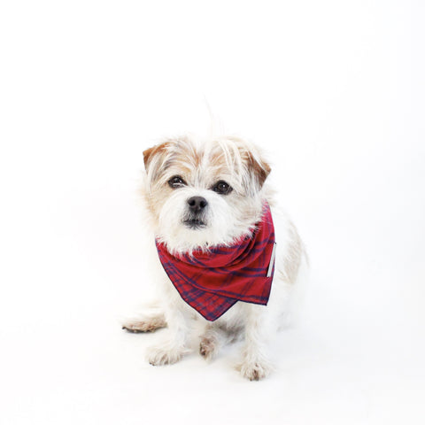 Image of Fientje Reversible Tie On Dog Bandanas | Hound and Friends