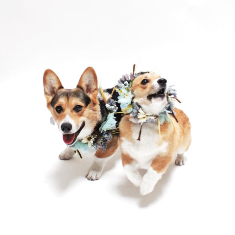 Image of Fitzgerald Flower Crown for Dogs, people and pets | Hound and Friends