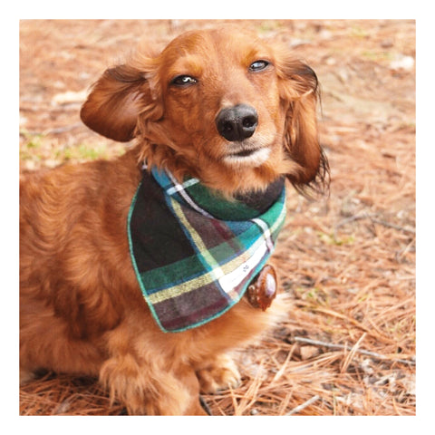 Stripes and Plaids Dog Bandanas Bundles | Hound and Friends