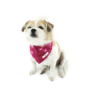 Floral Matching Dog Bandana Bundle Deal | Hound and Friends