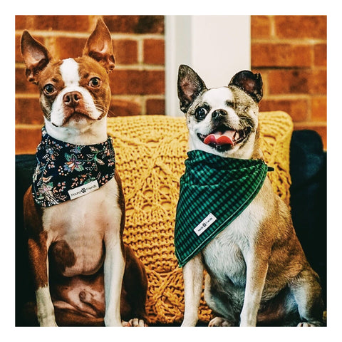 Abstract Pattern Prints Dog Bandana Bundle Deals to buy in 2021 | Hound and Friends