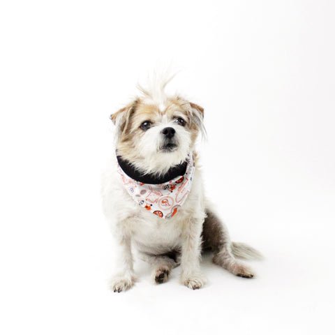 Image of Lexi Minions Reversible Tie-On Dog Bandanas and Accessories | Hound and Friends
