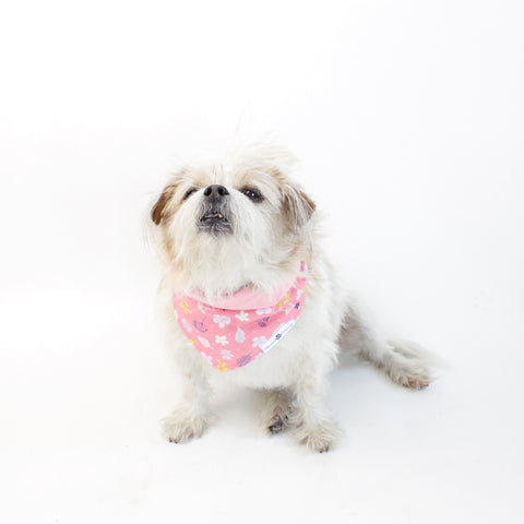 Image of Floral Matching Dog Bandana Bundle Deal | Hound and Friends