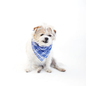 Marvin Reversible White and Blue Plaids Bandana for Matching Dog Bandanas and Accessories | Hound and Friends