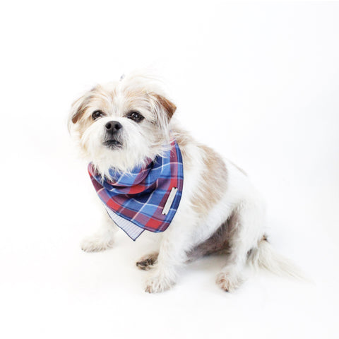 Monkey Reversible Dog Bandana matching with owners | Hound and Friends