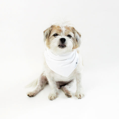 Image of Peek-a-Boo! Reversible tie-on Dog Bandana | Hound and Friends