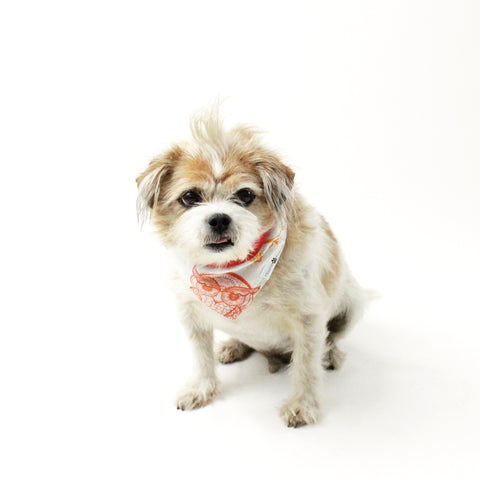 Image of Pixie Reversible Bandana