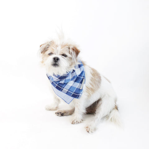 Riley Reversible Tie-on Blue Plaids Bandana for Matching Dog Bandanas and Accessories | Hound and Friends
