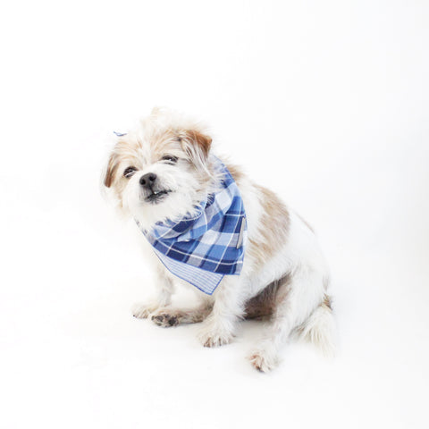 Image of Riley Reversible Scarf Bandana