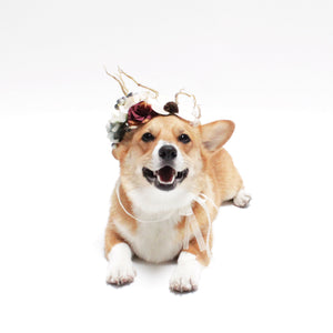 Rocco Flower Crown for dogs, pets and people | Hound and Friends