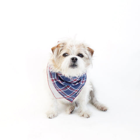 Image of Stinger Reversible Dog Bandana matching with owners | Hound and Friends