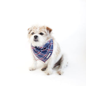 Stinger Reversible Dog Bandana matching with owners | Hound and Friends