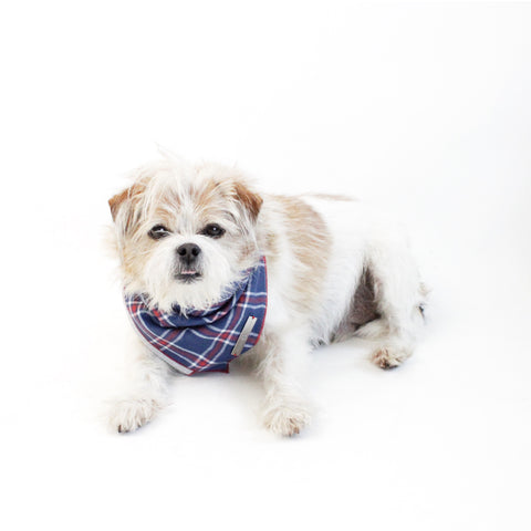 Image of Stinger Reversible Scarf Bandana