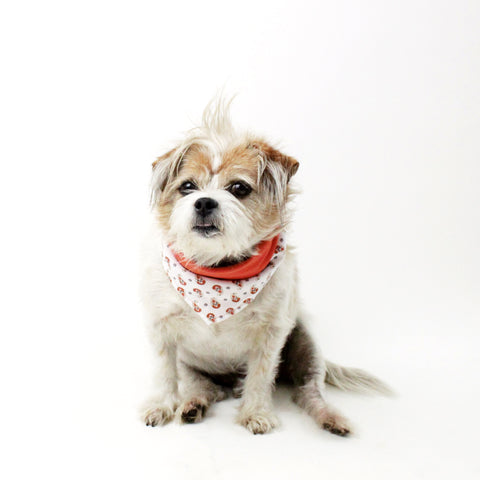 Surprise Mixture of Dog Bandanas and Accessories in different Bundles | Hound and Friends