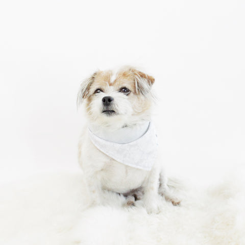 Image of Trixie Reversible Bandana